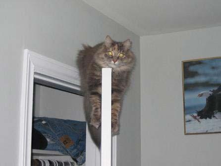 Door cat. & Cats Pezcame.Com